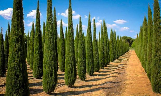 cypress-1.jpg