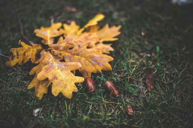 yellow-leaf-leaves-autumn